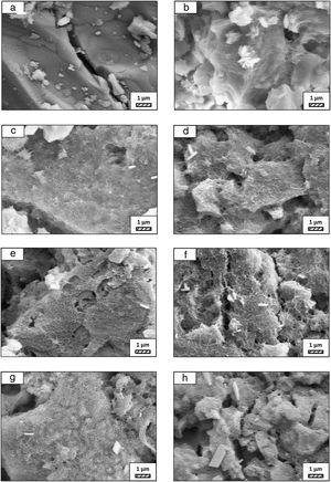SEM micrographs of coarse wafer before (a) and after immersion in LRS for (b) 1 day; (c) 3 days; (d) 5 days; (e) 7 days; (f) 14 days; (g) 21 days and (h) 28 days (20,000×).