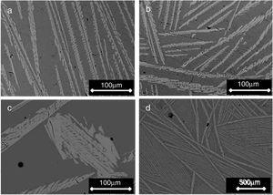 SEM micrographs of samples cooled through the mushy zone at rates of (a) 2, (b) 1, (c) and (d) 0.5°C/h [micrograph (d) was taken at lower magnification]. Primary dendrites of the β-C3Pss phase (light gray) can be seen embedded in a eutectic matrix (dark gray).