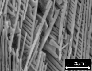 SEM micrograph of the fracture surface of a sample cooled at 0.5°C/h through the mushy zone, after soaking it in SBF for 7 days.