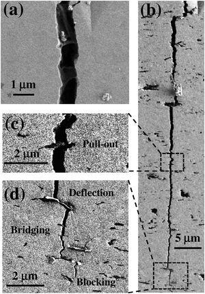 SEM images showing vertical indentation-induced cracks on the i.p. (a) and c.s. (b) surfaces of the composite with 4vol% BNNS. The images in (c) and (d) show high magnification of the selected areas in (b), revealing energy dissipation mechanisms: (c) BNNS pull-out, (d) crack deflection, bridging and blocking by BNNS.