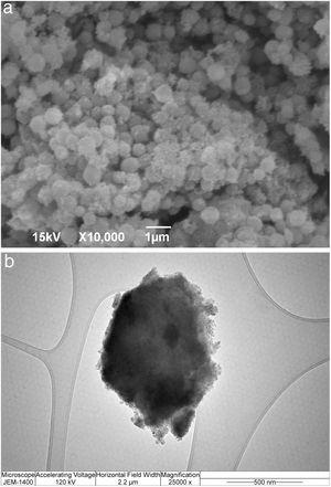 SEM and TEM micrographs of silica core-shell particles containing immobilized invertase.