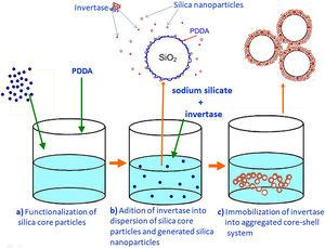 Preparation scheme of a mesoporous silica layer simultaneously with invertase immobilization.