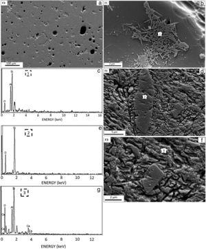 (a) SEM image of the sintered the F3 sample, (b) SEM image of etched the F3 sample, (c) EDX analysis of the region highlighted in (1) region, (d) Different region SEM image of the etched the F3 sample, (e) EDX analysis of the region highlighted in (2) region, (f) Another different SEM image of the etched the F3 sample, (g) EDX analysis of the region highlighted in (3) region.