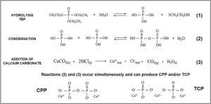 TEP hydrolysis and condensation reactions in the presence of calcium during core preparation.