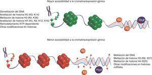 Mecanismos epigenéticos y sus efectos sobre la expresión de genes. La expresión de genes puede ser controlada a mediano y largo plazo modificando tanto los sitios de unión de factores de transcripción (FT) y la polimerasa de ARN (Pol II) sin mutar la secuencia primaria del ADN, así como la unión del ADN a las histonas (octámeros verdes y rojos). En la parte superior se indican aquellas modificaciones epigenéticas asociadas positivamente con la accesibilidad a la cromatina (histonas en verde), permitiendo la unión de la maquinaria transcripcional y la expresión génica. En contraste los mecanismos epigenéticos enlistados en la parte inferior reducen la accesibilidad a la cromatina (histonas en rojo), generando regiones con una estructura «cerrada» o evitando la unión de factores de transcripción al ADN mediante su metilación (círculos rojos unidos mediante una cinta púrpura al ADN).