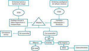 Algoritmo de diagnóstico y tratamiento de la eosinofilia esofágica y esofagitis eosinofílica propuesto para nuestras poblaciones. * Eosinofilia: ≥15 eosinófilos/campo de alto poder&#59; EGD: esofagogastroduodenoscopia&#59; EEo: esofagitis eosinofílica&#59; IBP: inhibidores de la bomba de protones&#59; Bx: biopsia&#59; EE-SIBP: eosinofilia esofágica sensible a IBP.