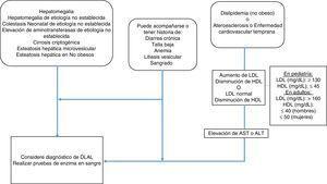Algoritmo diagnóstico para deficiencia de lipasa ácida lisosomal.