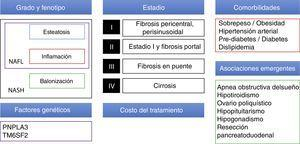 Elementos a tomar en cuenta para diseñar una estrategia terapéutica en NAFLD.