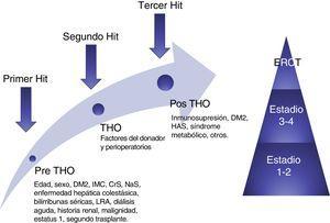 Modelo conceptual de la ERC postrasplante hepático ortotópico. El modelo muestra los factores de riesgo y 3 «hits» que resultan en daño renal y, finalmente contribuyen al desarrollo de ERC. CrS: creatinina sérica&#59; DM2: diabetes mellitus tipo 2&#59; ERC: enfermedad renal crónica&#59; ERCT: enfermedad renal crónica terminal&#59; IMC: índice de masa corporal&#59; LRA: lesión renal aguda&#59; NaS: sodio sérico&#59; THO: trasplante hepático ortotópico. Fuente: adaptado de Sharma et al.38.