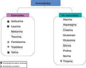 Clasificación de los aminoácidos.