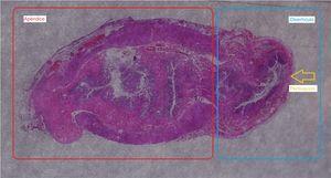 Imagen de histología.