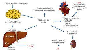 Interacciones fisiopatológicas que vinculan la enfermedad cardiovascular (ECV), la enfermedad renal crónica (ERC) y otras complicaciones observadas en la enfermedad por hígado graso no alcohólico (EHGNA). Chol-HDL: colesterol ligado a lipoproteínas de alta densidad; Chol-LDL: colesterol ligado a lipoproteínas de baja densidad; ROS: especies reactivas de oxígeno; TFG: tasa de filtración glomerular (TFG).