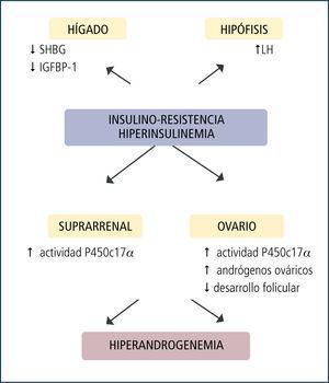 Efectos de la hiperinsulinemia en el sop