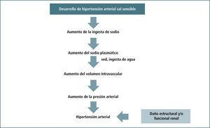 Resumen De La Hipótesis De Guyton Para Explicar El Desarrollo De Hipertensión Arterial Sal Sensible.