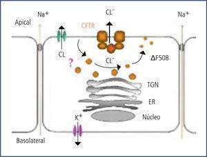 Canal del cloro, funcionamiento