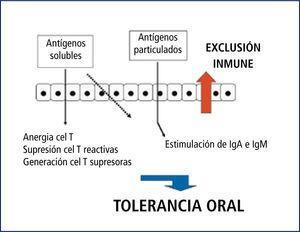 Representación esquemática del manejo de antígenos en la mucosa intestinal donde se desarrolla el fenómeno de tolerancia oral