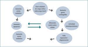 Hipótesis de la tendinopatía