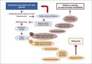 Mecanismos de la defecación