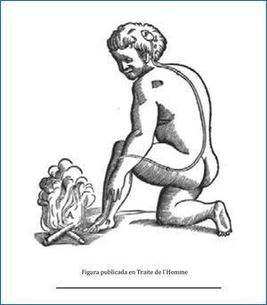Figura que se utilizó para ilustrar la respuesta refleja (ver explicación en el texto).