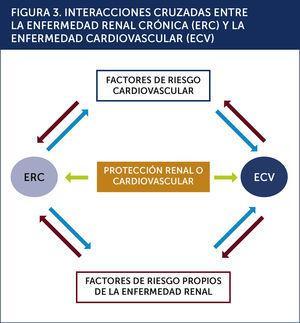 INTERACCIONES CRUZADAS ENTRE LA ENFERMEDAD RENAL CRÓNICA (ERC) Y LA ENFERMEDAD CARDIOVASCULAR (ECV) .