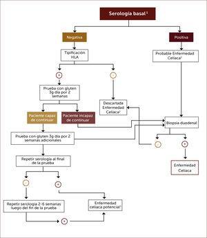 Algoritmo diagnóstico en pacientes que están en dieta libre de gluten sin tener el diagnÓstico formal de enfermedad celíaca 1 Anticuerpos anti-transglutaminasa tisular, anti-endomisio o anti-péptido gliadina deaminado. 2 Una biopsia duodenal normal o no diagnóstica de EC en un paciente con serología positiva requiere una prueba de dieta con gluten y nuevas biopsias para el diagnóstico o descarte definitivo. 3 Aquellos pacientes con serología positiva pero con biopsia normal tienen enfermedad celiaca potencial. 4 Una prueba de dieta con gluten de dos semanas puede arrojar falso negativo en un 10% de los casos, por lo que parece razonable extender la prueba por más tiempo. Adaptado de referencia 27.