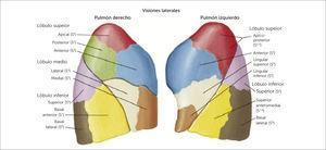 PULMÓN Atlas de anatomía humana 6a edición. Frank H. Netter, MD. Copyright 2014 by Saunders, an imprint of Elsevier Inc.