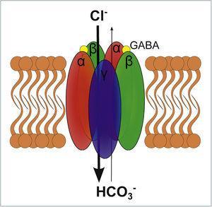 ESQUEMA DE UN RECEPTOR GABAA El receptor GABAA es un receptor ionotrópico que al activarse permite el paso de Cl− y HCO3, siendo Cl− 4 veces más permeable que HCO3−. El receptor se compone de 5 subunidades transmembrana, las cuales habitualmente son las que se representan en el esquema: αβαβγ. El receptor para activarse requiere de la unión de 2 moléculas GABA, las que se unen en ambas interfaces αβ lo que es representado en el esquema.