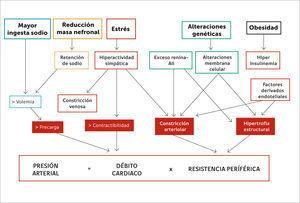 Regulación de la presión arterial (Referencia 17).