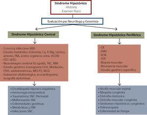 Enfrentamiento de Lactante con Sindrome Hipotónico Ca: calcio, P. Fósforo, Mg: Magnesio, PAA: Perfil de aminoácidos y acilcarnitinas, VLCFA: Ácidos grasos de cadena muy larga, EEG: electroencefalograma, aEEG: electro encefalograma de amplitud integrada, TAC: Tomografía axial computarizada, RM: Resonancia magnética, CGH: Hibridación genómica comparativa, FISH: Hibridación fluorescente in situ, MECP2: Metil CpG binding protein 2, NGS: Next generation sequencing, CK: Creatinquinasa, EMG: Electromiografía, VCN: Velocidad de conducción nerviosa, TER: Test de estimulación repetitiva, SNC: Sistema nerviosos Central, EIM: Errores innatos del metabolismo y CMT: Charcot Marie Tooth. Adaptado de Prasad A, Prasad C & De Vivo M, et al. (9,25).