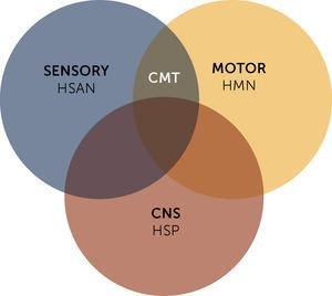 Overlapping between inherited neuropathies - Charcot Marie-Tooth (CMT) Hereditary sensory and autonomic neuropathy (HSAN) and hereditary motor neuronopathies (HMN) - and hereditary spastic paraparesis (HSP). CNS, Central nervous system.