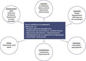 Compromiso multisistémico de la falla hepática fulminante. Modificado de referencia50.