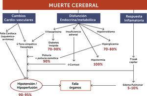 Fisiopatología de la muerte cerebral.