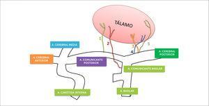 Irrigación talámica 1-Polar; 2-Paramediana; 3-Pediculo tálamo geniculado; 4-Coroidea posteromedial; 5-Coroidea posterolateral (Modificado del esquema de Lazorthes). Castaigne P, Lhermitte F, Buge A, et al. Paramedian thalamic and midbrain infarcts: clinical and neuropathological study. Ann Neurol 1981;10:127-4).