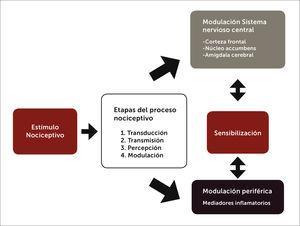 Fisiopatología del dolor lumbar. Desde el estímulo de dolor hasta la sensibilización y cronicidad del síntoma a través de sus respectivos mecanismos.