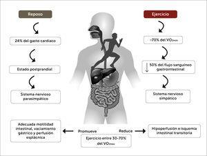 Respuestas neurovasculares del sistema gastrointestinal en reposo y ejercicio. Diferencia entre las respuestas neurovasculares agudas sobre el sistema gastrointestinal en estado de reposo y durante el ejercicio de resistencia aeróbica, a diferentes intensidades respecto al consumo máximo de oxígeno.