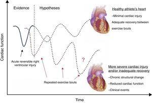 Potential effects of repeated exercise bouts on RV function.