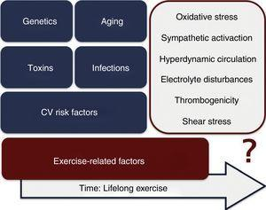 Factors potentially involved in the development of coronary artery disease in athletes. CV: cardiovascular.
