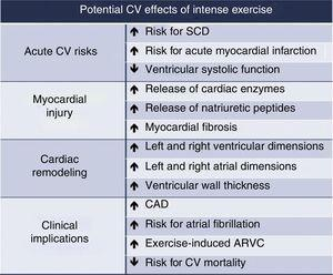 Potential cardiovascular effects of regular intense exercise training. ARVC: arrhythmogenic right ventricular cardiomyopathy&#59; CAD: coronary artery disease&#59; CV: cardiovascular&#59; SCD: sudden cardiac death.