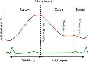 Longitudinal Strain Curve during the different phases of the cardiac cycle.