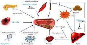 Fatores que contribuem para o risco cardiovascular aumentado na diabetes mellitus tipo 2. AGL, ácidos gordos livres; HDL, lipoproteínas de alta densidade; LDL, lipoproteínas de baixa densidade; PAI‐1, inibidor do ativador do plasminogénio tipo 1; PCR, proteína C‐reativa; TG, triglicéridos; TNF‐α, fator de necrose de tumores alfa; VLDL, lipoproteínas de muito baixa densidade. Adaptado de 62.