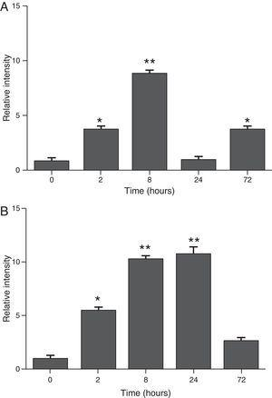Determination of SAA levels by dot blot immunodetection in mice at 2, 8, 24 and 72h after exposure to A. fumigatus. (A) SAA levels in serum samples. (B) SAA levels of lung protein extracts. SAA levels are expressed in terms of relative intensity (the fold increase compared with time 0) for each experimental group of mice. The bars represent the average result from triplicate experiments for serum and lung protein extracts at each sampled time point (* and ** indicate that p<0.05 and p<0.01, respectively, in comparisons among the groups of mice that were sampled at different times after the exposure to A. fumigatus).