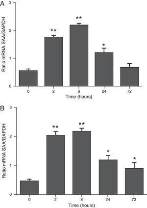 The determination of SAA mRNA expression by RT-PCR in mice at 2, 8, 24 and 72h after exposure to A. fumigatus. (A) The expression of SAA mRNA in BALF cells. (B) The expression of SAA mRNA in the lungs. SAA mRNA expression levels are presented in terms of the SAA1/GAPDH ratio for each experimental group of mice. The bars represent the average result from triplicate experiments for BALF cells and lung samples for each sampled time point (* and ** indicate that p<0.05 and p<0.01, respectively, in comparisons among the groups of mice that were sampled at different times after the exposure to A. fumigatus).