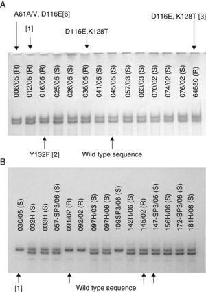 (A) SSCP gel of the first ∼400bp of ERG11 gene of Candida albicans clinical isolates showing different mutations (indicated by arrows) at the same electrophoresis pattern. (B) SSCP gel of the last ∼400bp of ERG11 gene of Candida tropicalis clinical isolates showing different electrophoresis patterns with the same wild type sequence. Silence mutations are presented in brackets and heterozygosity by a slash.