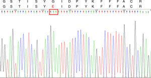 CYP51A DNA sequencing chromatogram and Cyp51Ap amino acid sequence for the ITC-resistant A. fumigatus strains. Upper line: Segment of the wild type A. fumigatus Cyp51Ap (GenBank accession no. AAK73659.1) between the amino acid residues 48 and 65. Lower line: the same Cyp51Ap segment of the ITC-resistant strain, showing the amino acid substitution (G54E). The red box in the DNA sequencing chromatogram shows the mutated codon 54.