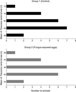 Frequency distribution of Toxocara canis larvae in the organs (heart, lungs and liver) of the animals in group 1 (control – infected with T. canis eggs) and group 2 (infected with T. canis fungus-exposed eggs).