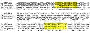 The comparative sequence homology of Alt a 1 gene is shown in A. alternata, U. chartarum and S. botryosum.