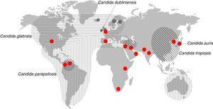 Distribución geográfica de las especies principales de Candida diferentes de Candida albicans que son la segunda causa de candidemia. Los círculos rojos representan los lugares donde se han descrito candidiasis causadas por Candida auris.Fuente: modificada de Quindós45.