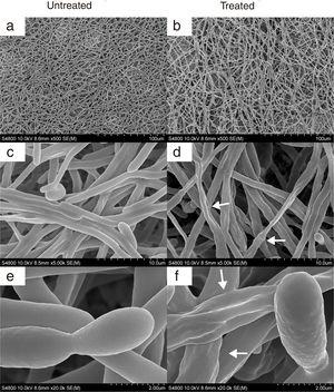 SEM images of 24-h biofilm of C. albicans SC5314 developed at 37°C in RPMI+FBS10% with CAGTA 80μg/ml (right panel) or without antibodies (left panel). Magnification: ×500 (a, b), ×5000 (c, d) and ×20,000 (e, f). Arrows highlight the altered surface and protuberances of CAGTA treated cells.