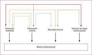 La interrelación entre la disfunción endotelial, la inflamación, la microalbuminuria y los factores de riesgo clásicos contribuye a la muerte de causa cardiovascular.
