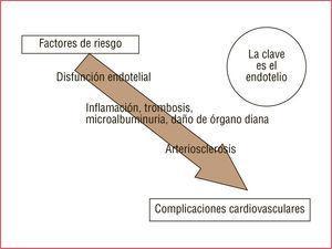 La asociación de la microalbuminuria con los factores de riesgo tradicionales, el daño de órganos diana y, en definitiva, las complicaciones cardiovasculares pone de manifiesto el protagonismo del endotelio.